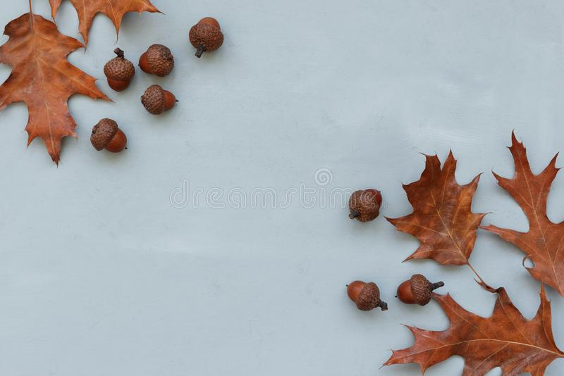 Frame made of autumn oak leaves and acorns on gray wooden background. Flat lay. Top view. Copy space. Autumn fall or Thanksgiving stock photography