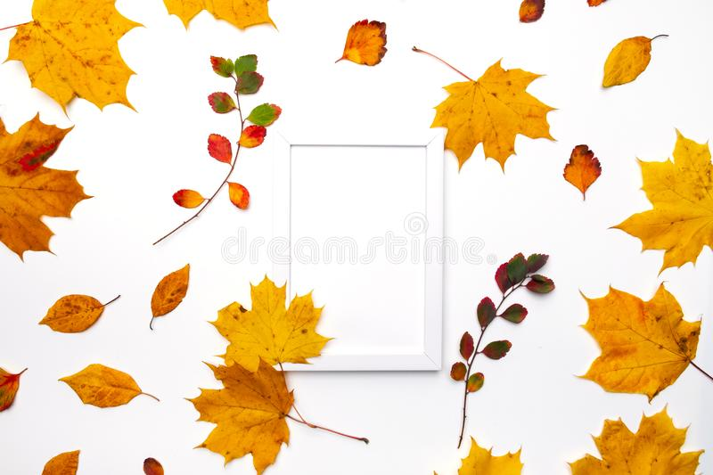 Frame made of beautiful autumn dried leaves on white background. Fall concept. Autumn background. Flat lay, stock image