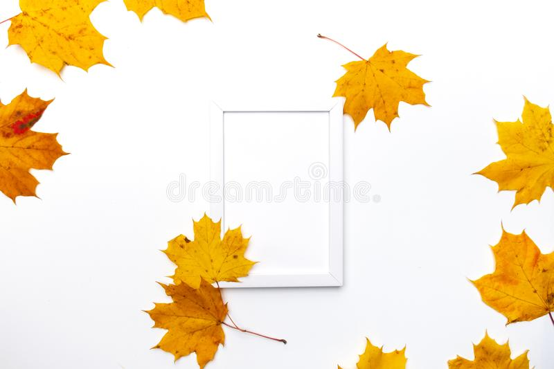 Frame made of beautiful autumn dried leaves on white background. Fall concept. Autumn background. Flat lay, top view, royalty free stock images