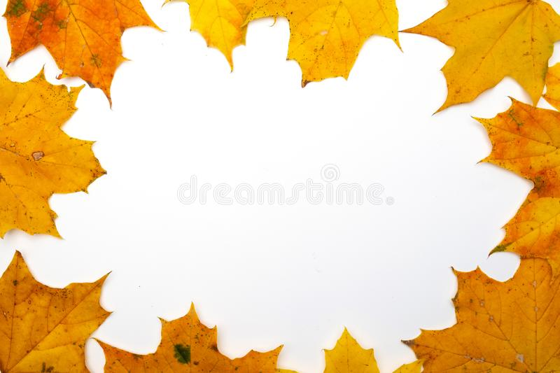 Frame made of beautiful autumn dried leaves on white background. Fall concept. Autumn background. Flat lay, top view, royalty free stock photos