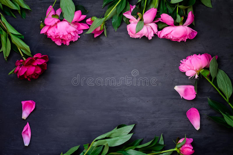 Frame made of beautiful pink peonies on wooden black background. Flat lay, top view. Floral frame. Frame of flowers. Dark Backgrou stock photo