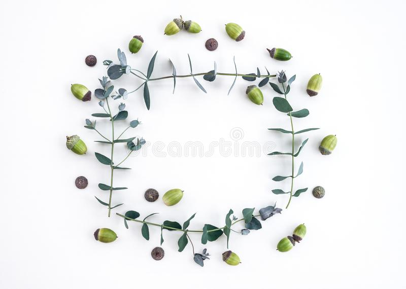 Eucalyptus and acorns frame on white background royalty free stock photography