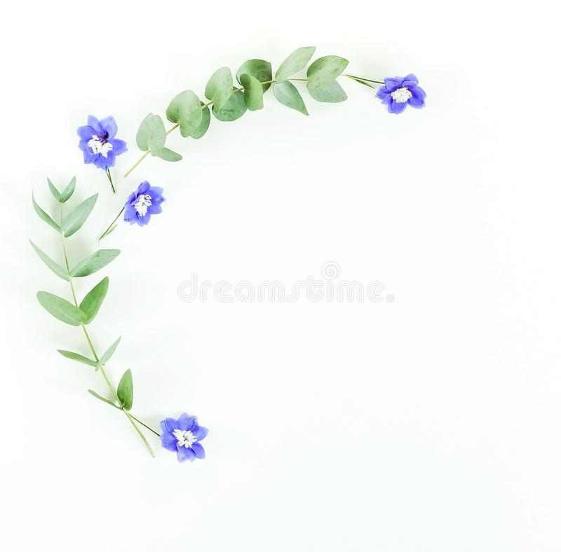 Frame made of eucalyptus branches and blue flowers on white background. stock photos