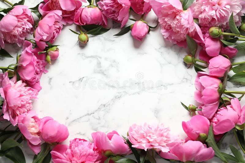 Frame made of fragrant peonies on marble table, space for text. Beautiful spring flowers royalty free stock image