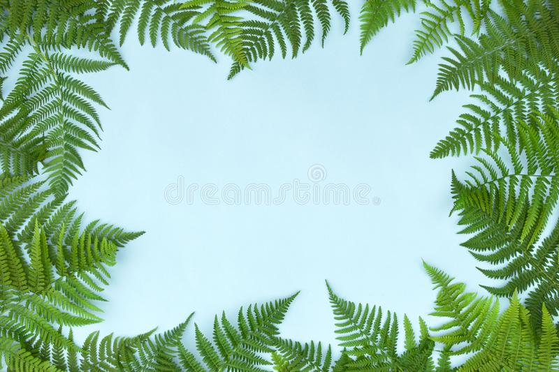 Frame made of green fern leafs, palm frond on light background. Abstract tropical leaf background, trendy creative design. Flat stock images