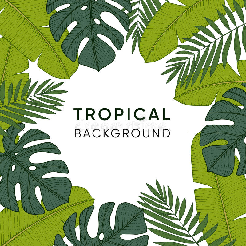 Frame made of hand drawn tropical palm, banana and monstera leaves. Engraving design. Botanical illustrations. Exotic jungl. Frame made of hand drawn tropical vector illustration