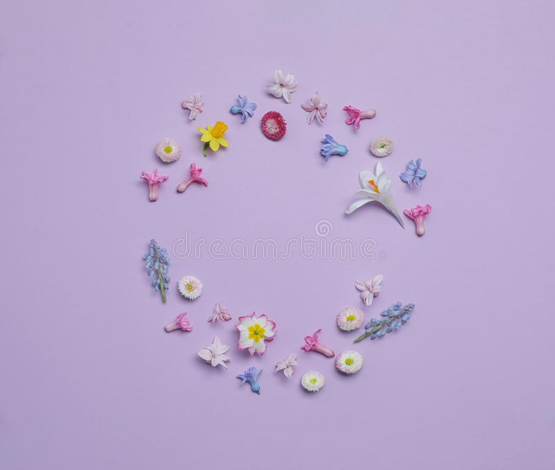 Frame made with hyacinth and other spring flowers on color background, top view. Space for text royalty free stock images