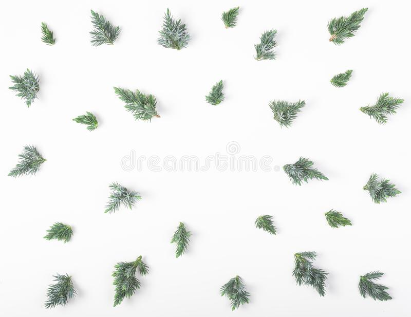Frame made of juniper branches isolated on white background. Top view. Flat lay. Christmas or New year composition stock photo