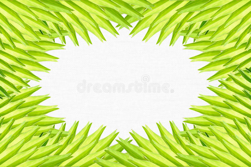 Frame made of palm leaves royalty free stock images