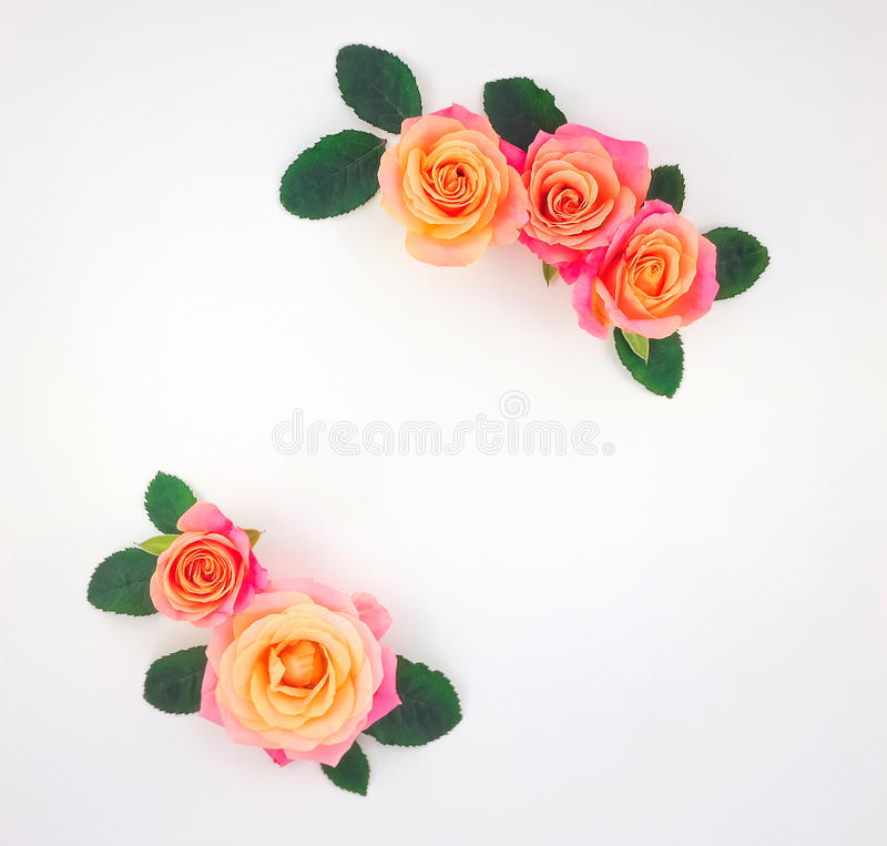 Frame made of pink-orange roses and green leaves on white background. Flat lay, top view royalty free stock photo