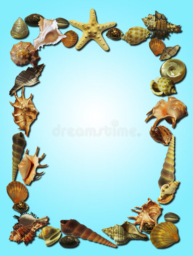 Frame made of shells stock images