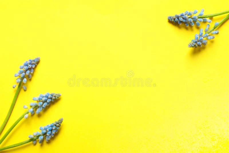 Frame made of spring muscari flowers on color background, top view stock image
