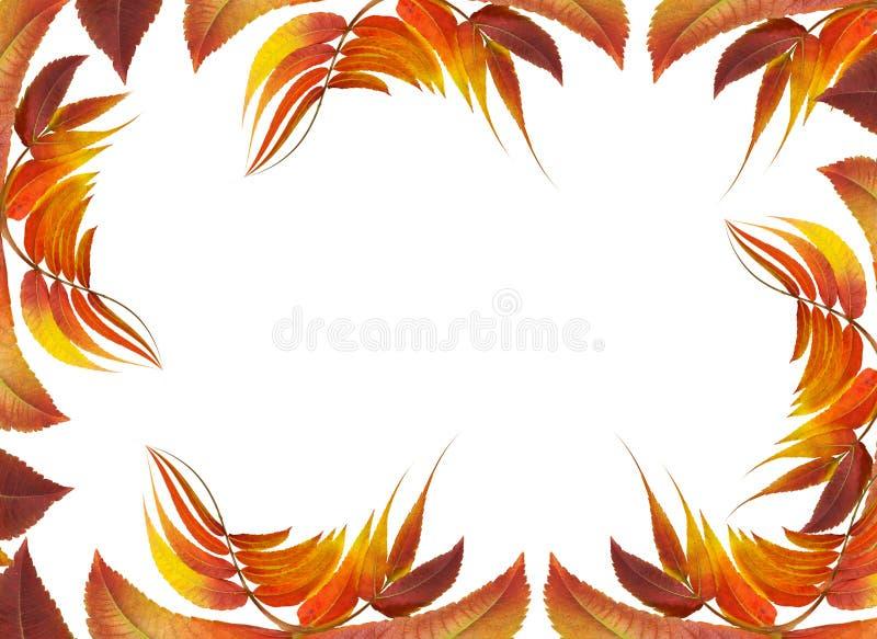 Frame met de herfstbladeren stock illustratie