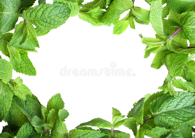 Frame of mint stock photo