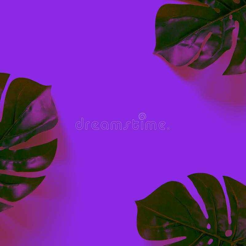 Frame of Monstera leaves on neon background and light in trendy colour Proton Purple. Minimal style flat lay with copy space stock photography