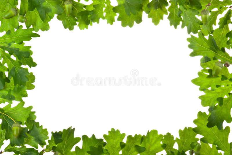 Frame of oak leaves in backlight royalty free stock images