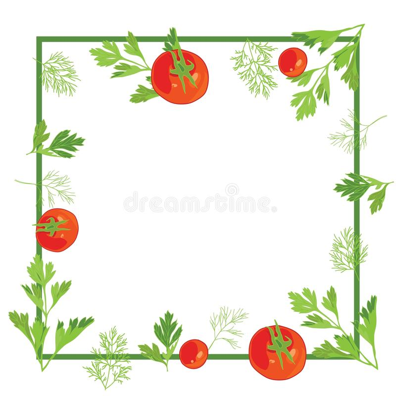 Frame with parsley and dill and tomatoes vector illustration