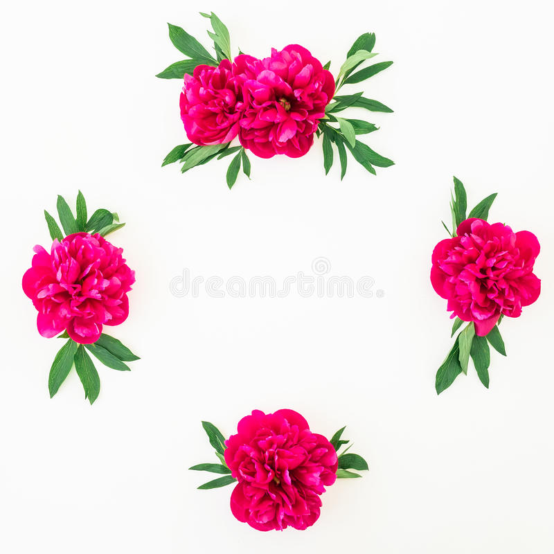 Frame of peony flowers and leaves on white background. Flat lay, top view. Pattern made of flowers royalty free stock image