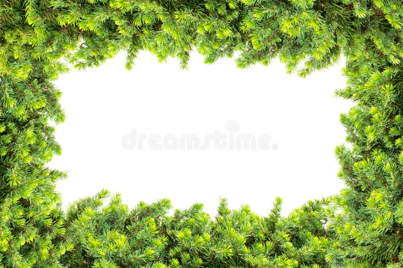 Frame made of pine isolated on white background stock photos
