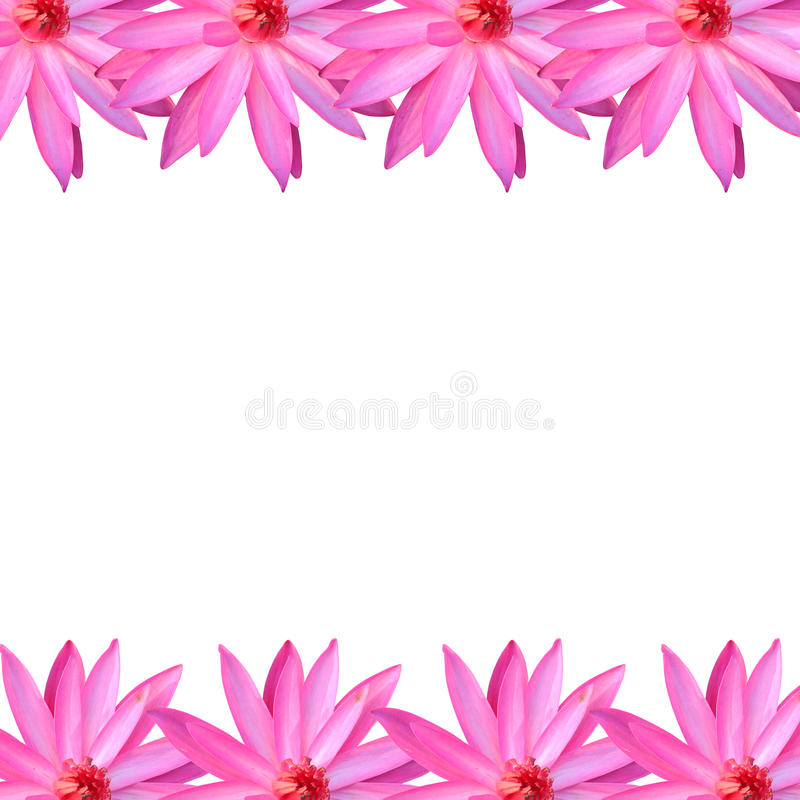 Download Frame Pink Lotus Isolated On White Background. Stock Image   Image  Of Bloom,