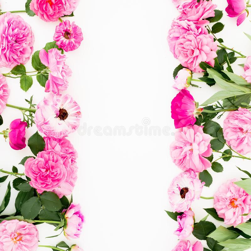 Frame of pink ranunculus flowers, roses and leaves on white background. Floral lifestyle composition. Flat lay, top view. Frame of pink ranunculus flowers, roses royalty free stock photography