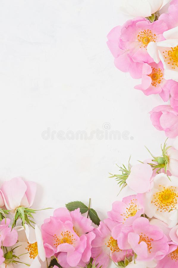 Frame of pink roses, buds and leaves on white background. Flat lay, top view. Floral background. stock images