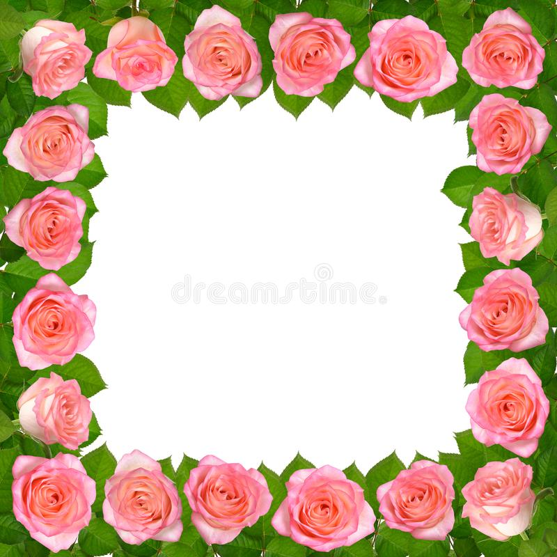 Frame with Pink roses. Isolated on white background. stock illustration