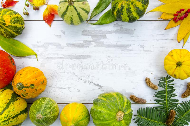 Frame from colorful decorative pumpkins ,dry leaves and berries, on a wooden table. Autumn mockup flat lay design. Frame with pumpkins on a wooden table. Autumn royalty free stock photo