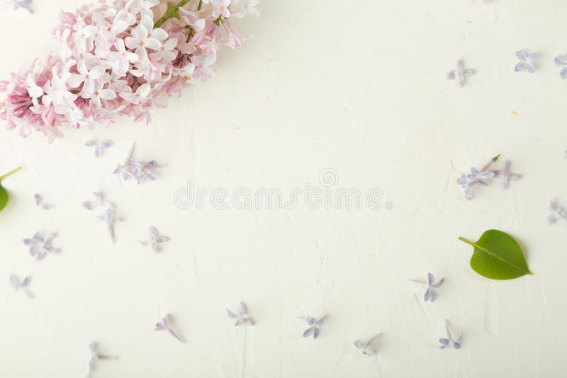 Frame with purple lilac flowers on white background stock photos