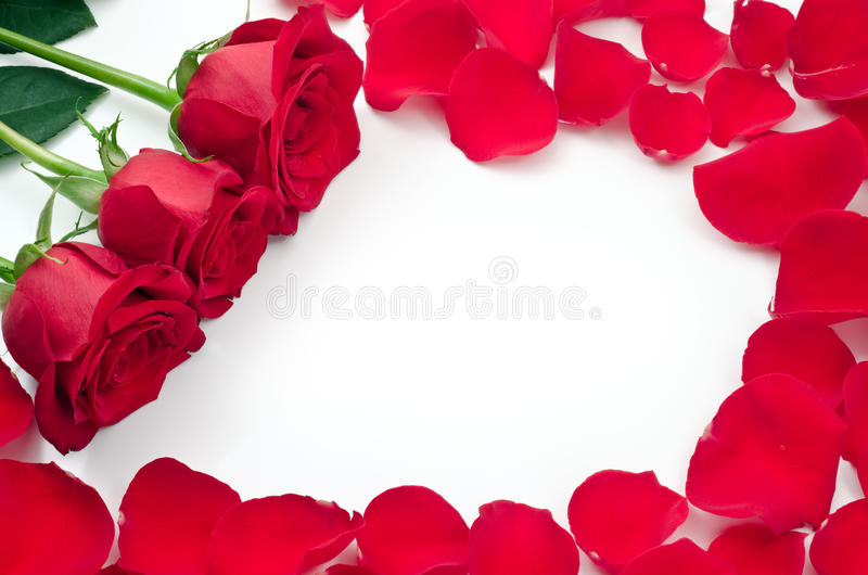 Frame of rose flowers and petals stock photos