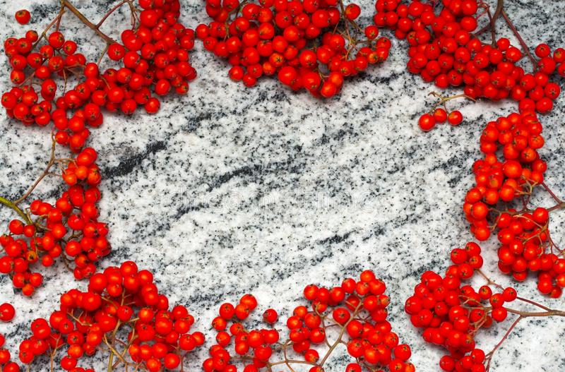 Frame from rowan bunches with ripe berries on Viscount White granite countertop royalty free stock images