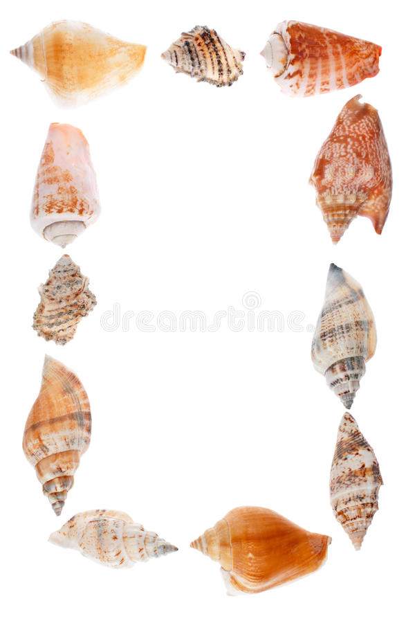 Download Frame of seashells stock photo. Image of lagoon, ocean - 26612542