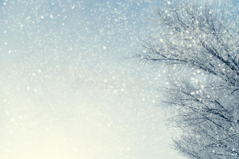 Frame of snowy tree branches against blue sky during the snowfall with copy space for text. Winter landscape. stock photos