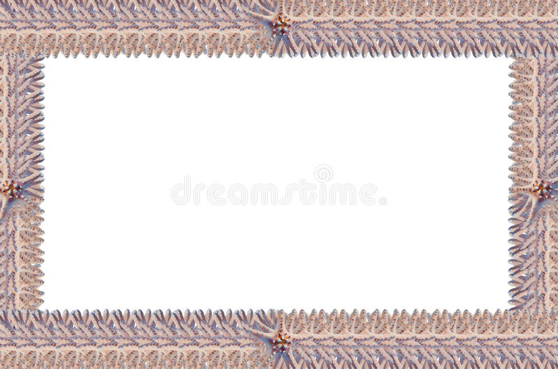 Frame of starfish. The form of frames made from starfish stock images