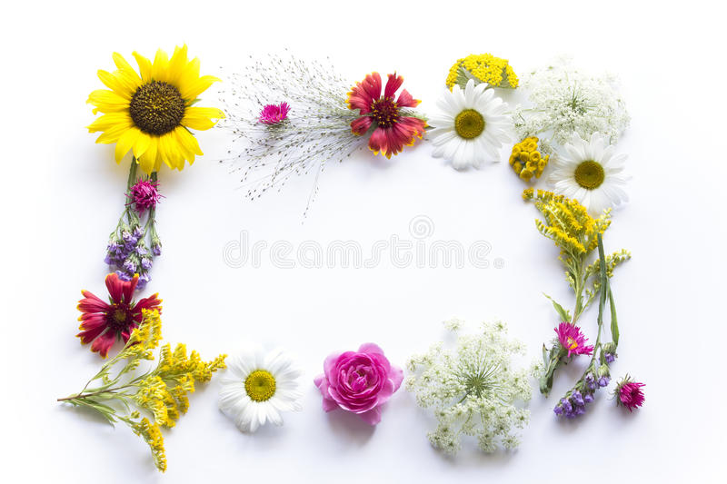 Frame of Summer Flowers on White Background royalty free stock photos