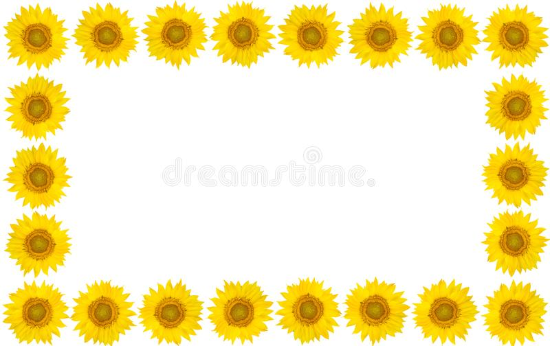 Frame of sunflower flowers on isolated white background. View fr royalty free stock photo