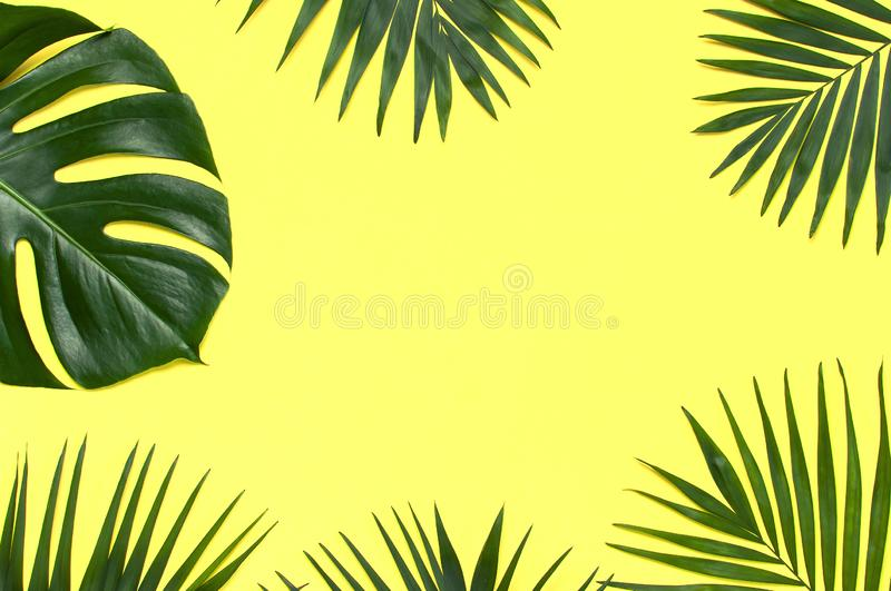 Frame of tropical palm leaves and monstera leaf on pastel yellow background. Flat lay, top view, copy space. Summer background, stock photography