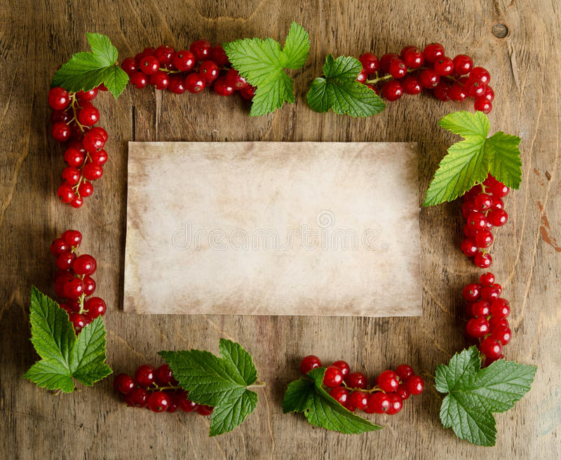 Frame of twigs currants stock images