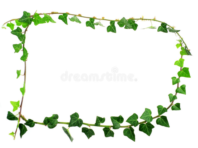 Frame van groene klimop stock afbeelding