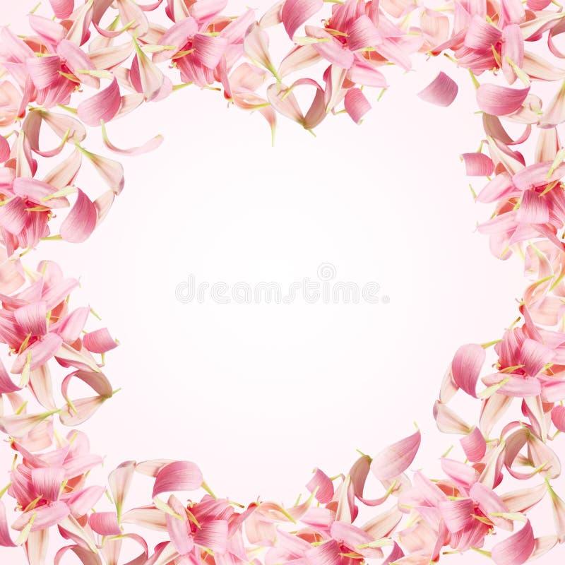 Frame van roze bloemblaadjes royalty-vrije stock afbeeldingen
