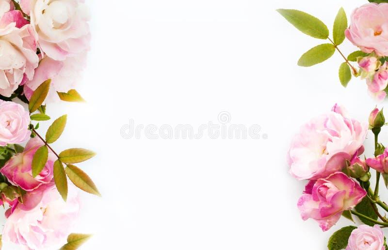 Frame van roze rozen stock afbeelding