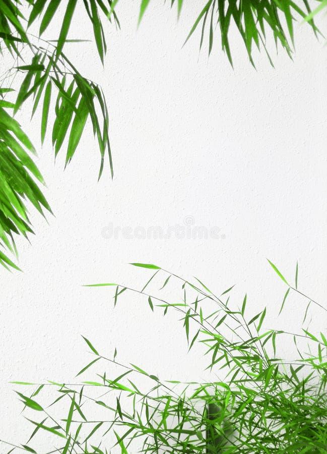 Frame verde das folhas de bambu imagens de stock royalty free