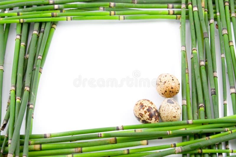 Frame verde de Easter das hastes fotos de stock royalty free