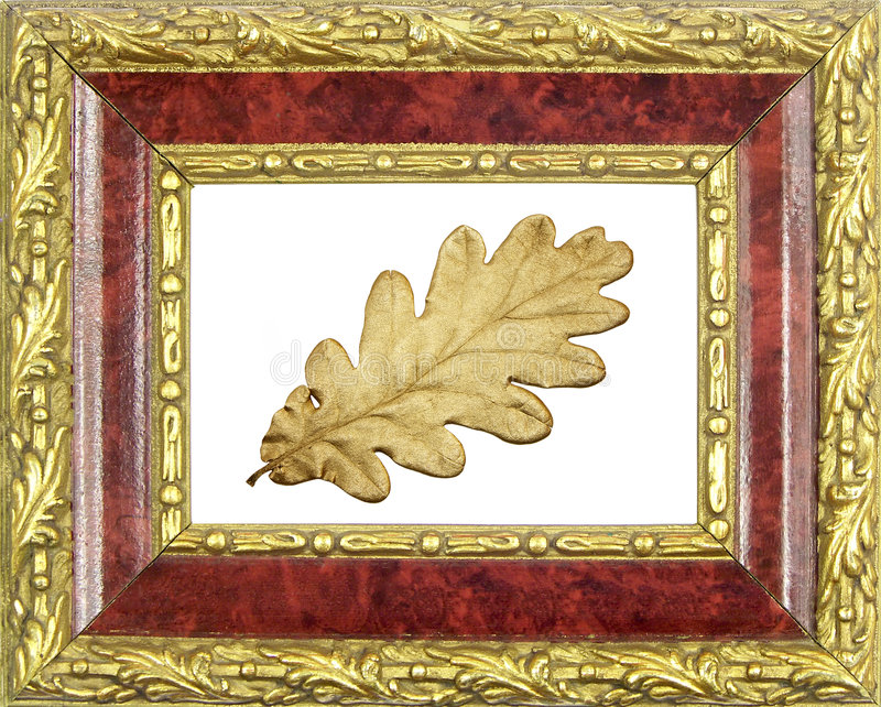 Frame verguld eiken blad royalty-vrije stock afbeeldingen