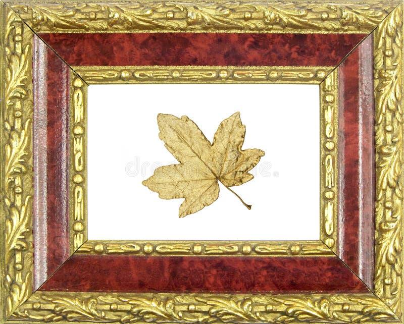 Frame verguld esdoornblad royalty-vrije stock fotografie