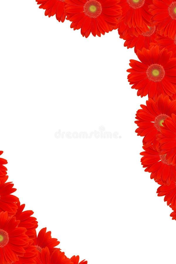 Frame vermelho da margarida fotos de stock royalty free