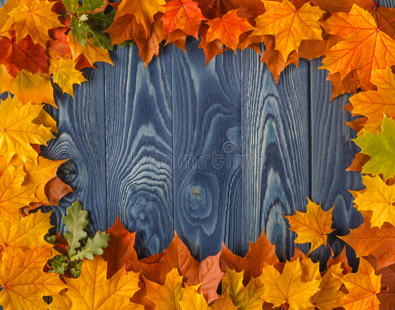 Frame from vivid colorful autumn leaves on the grunge wooden cyan desk, vintage seasonal background stock photos