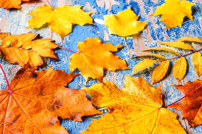 Frame from vivid colorful autumn leaves on the grunge wooden cyan desk stock photo