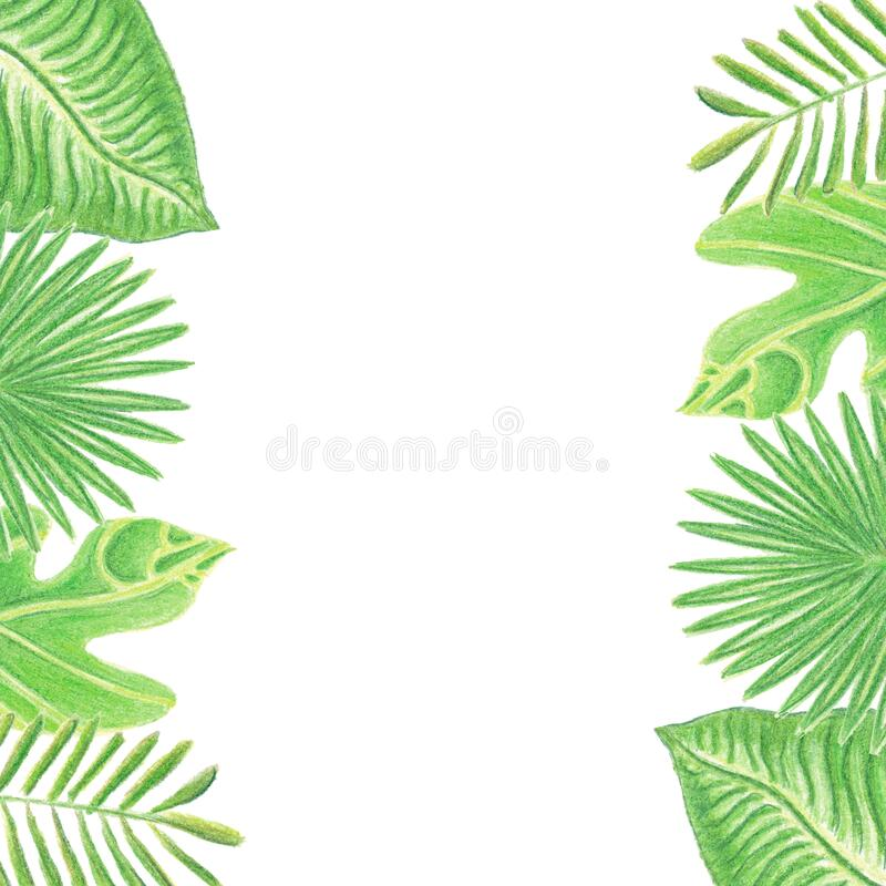 Frame with watercolor colored pencils hand drawn tropic leaves. Isolated on white background with copy space for text. Concept of holidays, rest, summer, spring royalty free stock images