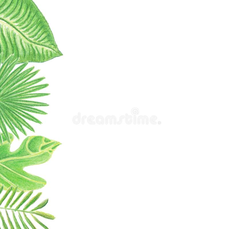 Frame with watercolor colored pencils hand drawn tropic leaves. Left side frame with watercolor pencils hand drawn tropic leaves isolated on white background royalty free stock photography